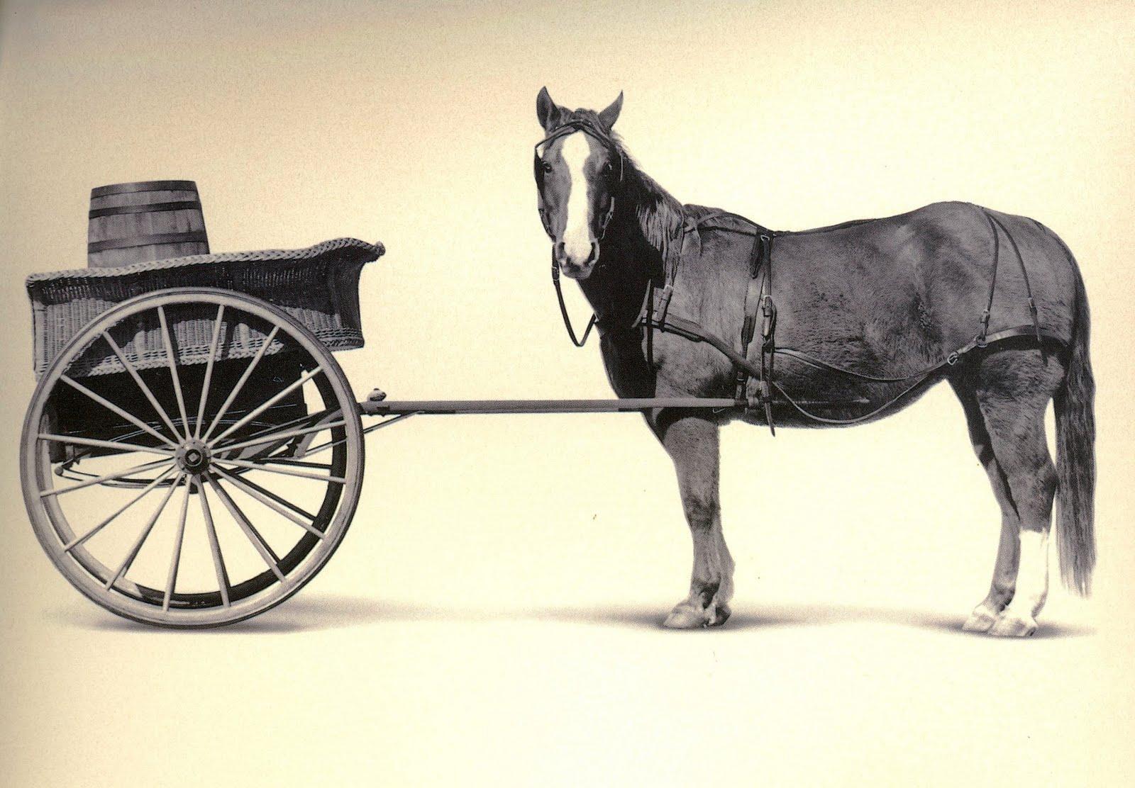 cartb4horse